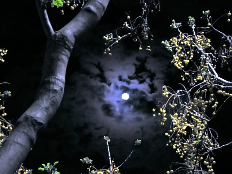 Image of full moon through trees