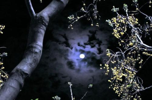 Image of full moon through trees