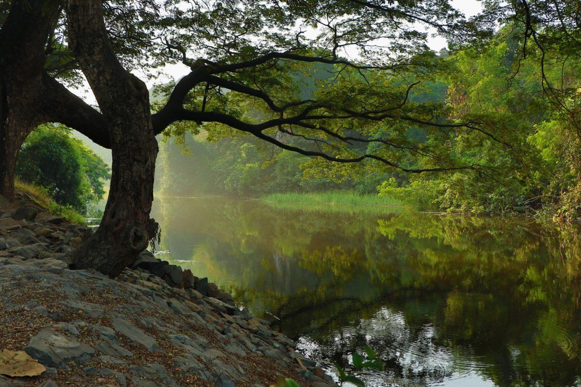 Tree at river embankment